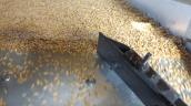 Les gros grains remontent la pente tandis ce que les petits restent en bas de la table