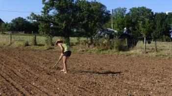 Préparation du terrain pour le semis de haricots