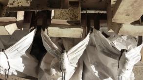 Les résidus de tri ne sont pas perdu et serviront à nourrir les animaux
