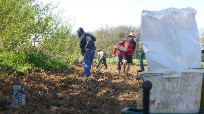 plantation des patates!